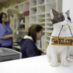 Pet Dominion front desk