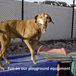 fun on our playground equipment