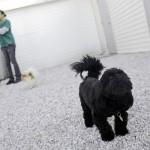 dog on the playground
