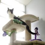 cat in a cat tree
