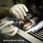routine dental cleaning