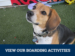 Dog Boarding Activities