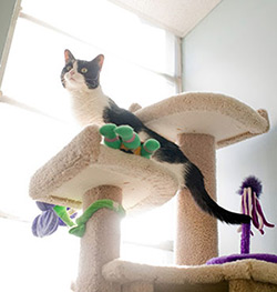 Cat playing in cat tree