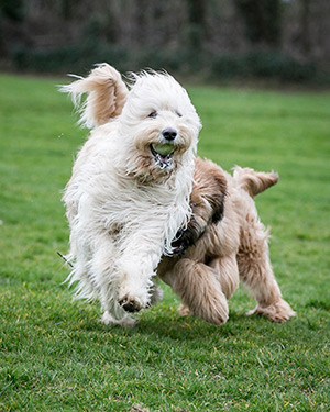 Two dogs playing in the yard