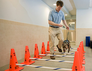 Dog rehab on training course