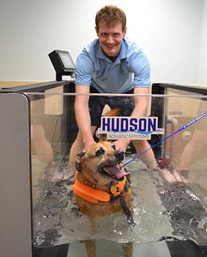 Dog on underwater treadmill
