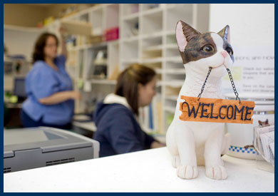 Cat with welcome sign in the vet's office
