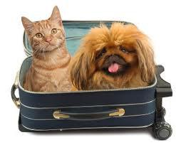 Traveling pets