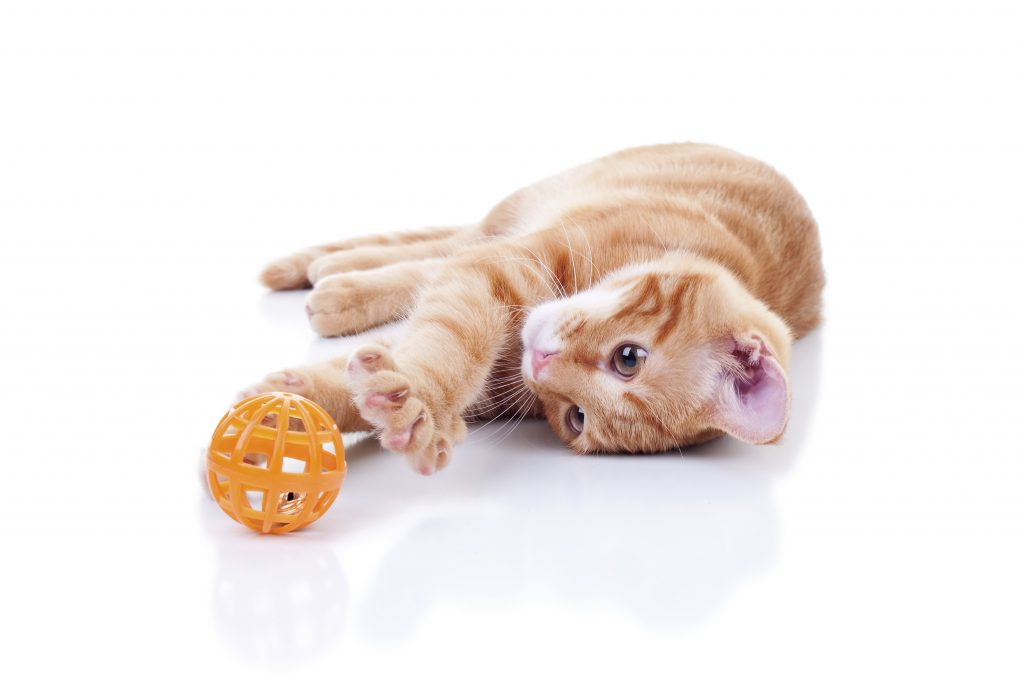 how soon can you neuter a cat